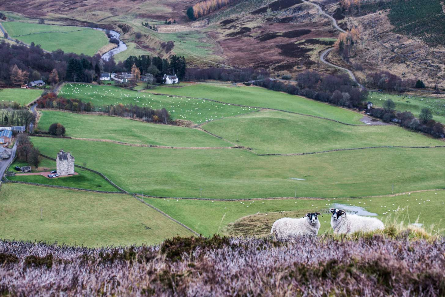Forter castle pictured from Mt Blair.